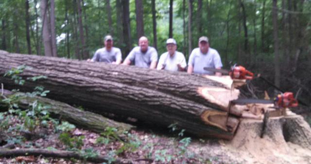 Dave's family harvests trees from a farm they've owned since the 1930's. Everybody gets in the act. Left to right, Dave's son Doug; Dave; Noel (Dave's 90-year old dad), and brother Donald.